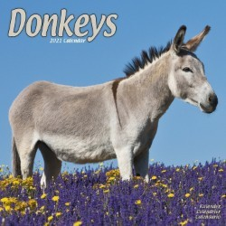 Donkeys Wall Calendar 2021 by Avonside