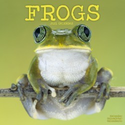 Frogs Wall Calendar 2021 by Avonside