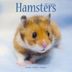 Hamsters Wall Calendar 2021 by Avonside