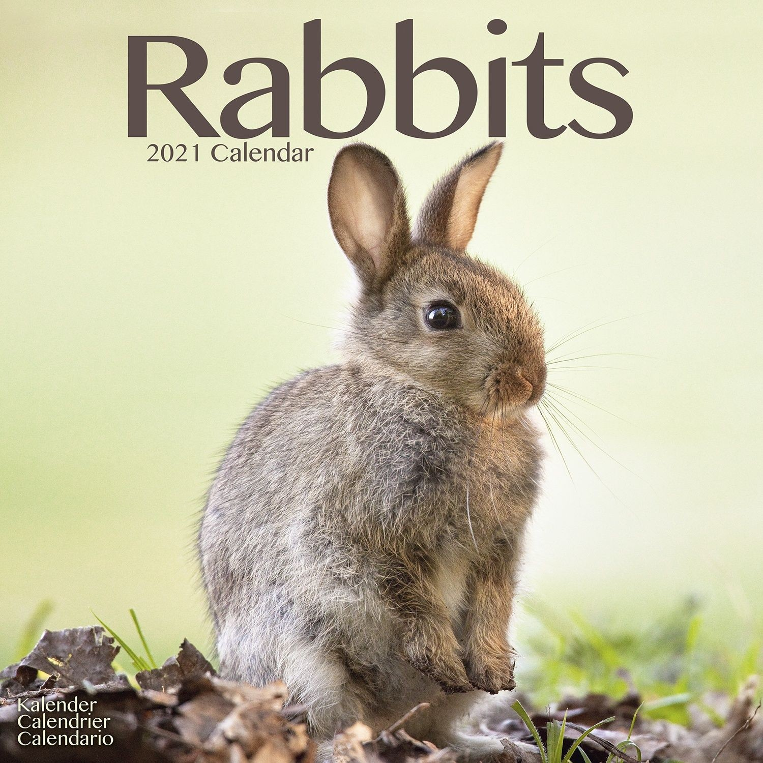 Rabbits Wall Calendar 2021 by Avonside
