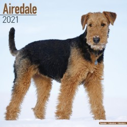 Airedale Wall Calendar 2021 by Avonside