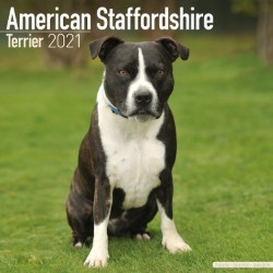 American Staffordshire Terrier Wall Calendar 2021 by Avonside