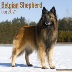 Belgian Shepherd Dog Wall Calendar 2021 by Avonside