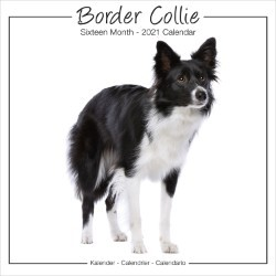Border Collie Studio Range Wall Calendar 2021 by Avonside