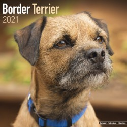 Border Terrier Wall Calendar 2021 by Avonside