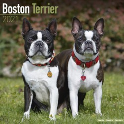 Boston Terrier Wall Calendar 2021 by Avonside