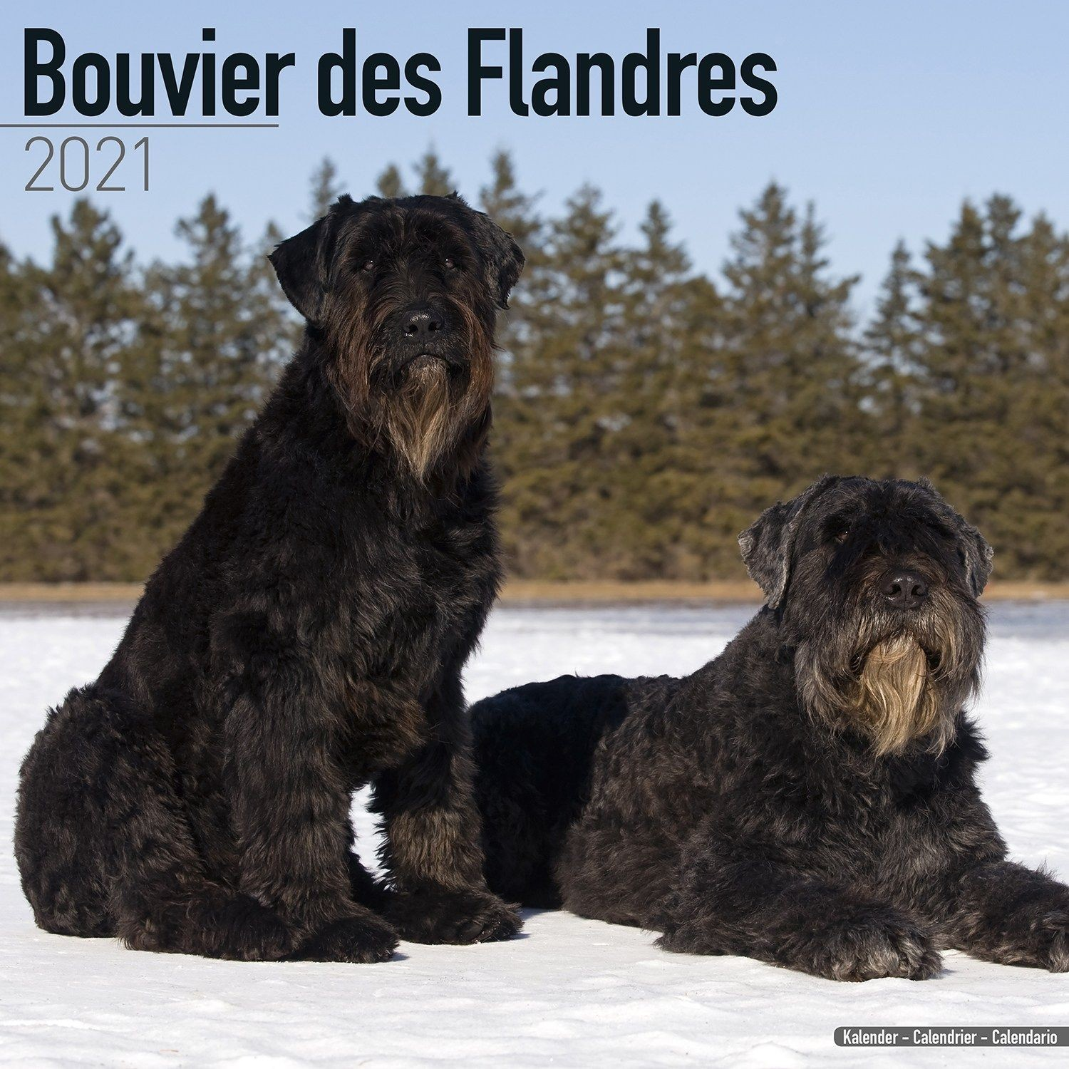 Bouvier Des Flandres (Euro) Wall Calendar 2021 by Avonside