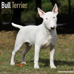 Bull Terrier Wall Calendar 2021 by Avonside