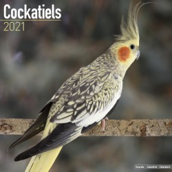 Cockatiels Wall Calendar 2021 by Avonside