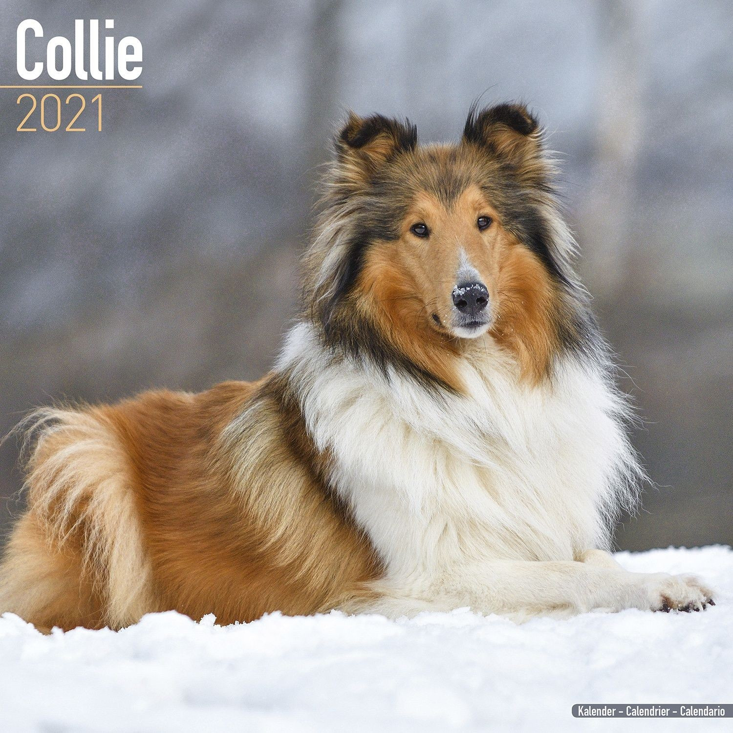 Collie Wall Calendar 2021 by Avonside