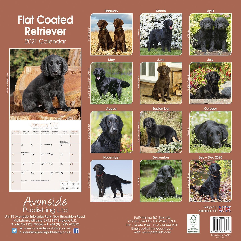 Flatcoated Retriever Calendar, Dog Breed | Pet Prints Inc