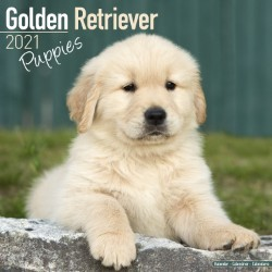 Golden Retriever Puppies Wall Calendar 2021 by Avonside
