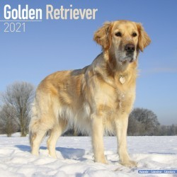 Golden Retriever Wall Calendar 2021 by Avonside