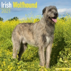 Irish Wolfhound Wall Calendar 2021 by Avonside