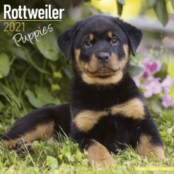 Rottweiler Puppies Wall Calendar 2021 by Avonside