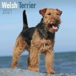 Welsh Terrier Wall Calendar 2021 by Avonside