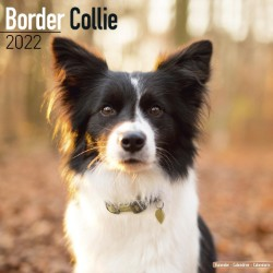 Border Collie Wall Calendar 2022