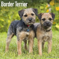 Border Terrier Wall Calendar 2022