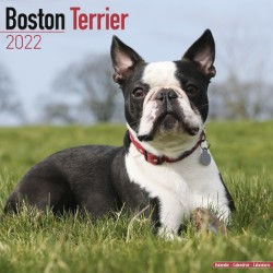 Boston Terrier Wall Calendar 2022