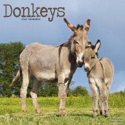 Donkeys Wall Calendar 2022