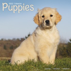 Puppies Wall Calendar 2022
