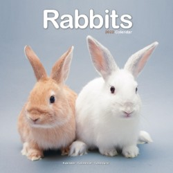 Rabbits Wall Calendar 2022