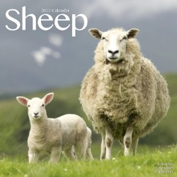 Sheep Wall Calendar 2022